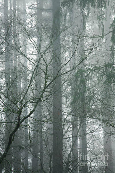 Photograph - Fog In The Forest by Charmian Vistaunet