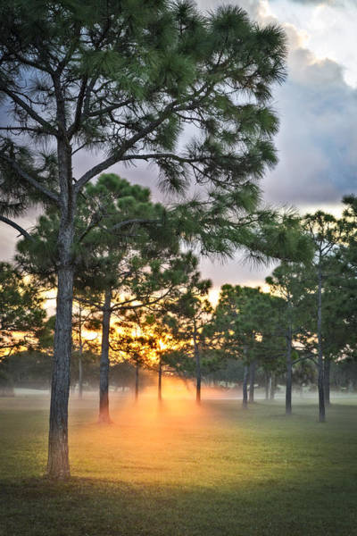 Okeeheelee Park Photograph - Fog In The Forest by Debra and Dave Vanderlaan