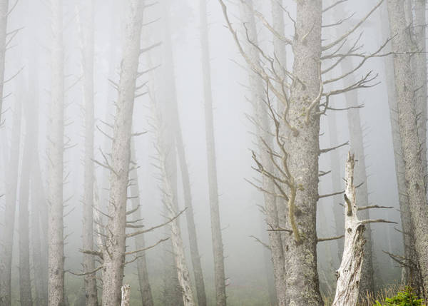 Photograph - Fog In The Forest by Robert Potts