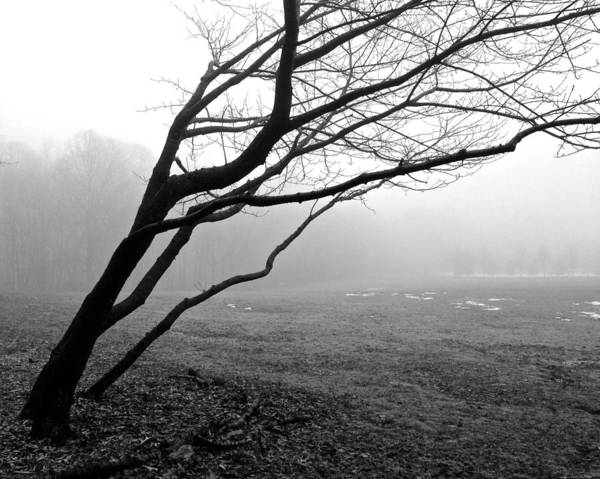 Photograph - Fog In Veterans Park by Polly Castor