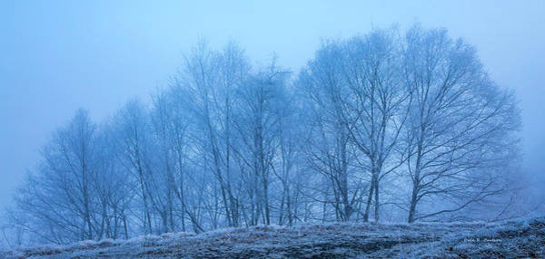 Photograph - Fog Lace by Dale R Carlson