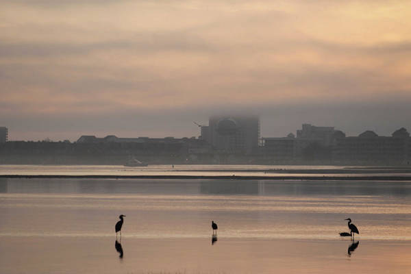 Photograph - Fog Over Ocean City Md by Robert Banach
