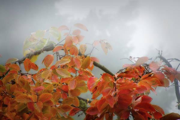 Fog Digital Art - Fog Rolling In by Terry Davis