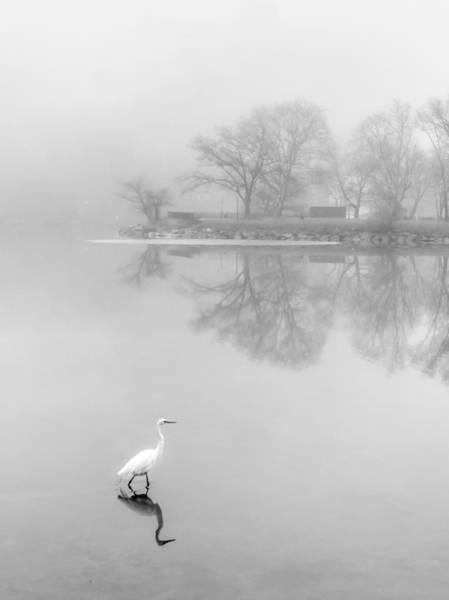 Photograph - Fog by Shannon Kelly