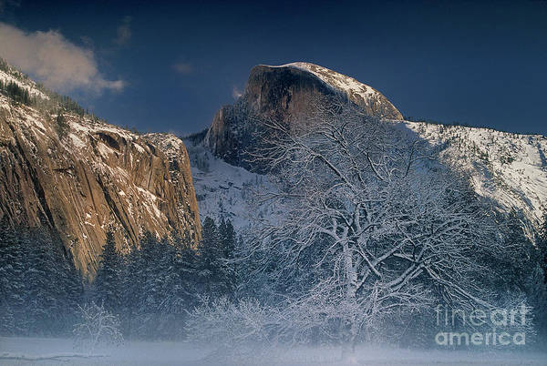 Photograph - Fog Shrouded Black Oak Half Dome Yosemite Np California by Dave Welling