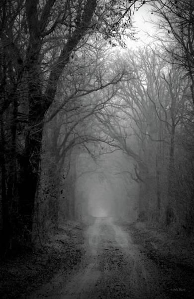 Photograph - Fog Shrouded Lane B W  7861 Bw_2 by Steven Ward