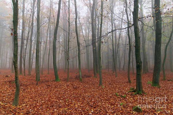 Woodland Wall Art - Photograph - Foggy Autumn Beech Forest by Michal Boubin