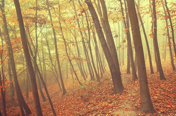 Photograph - Foggy Autumn Forest by Jenny Rainbow