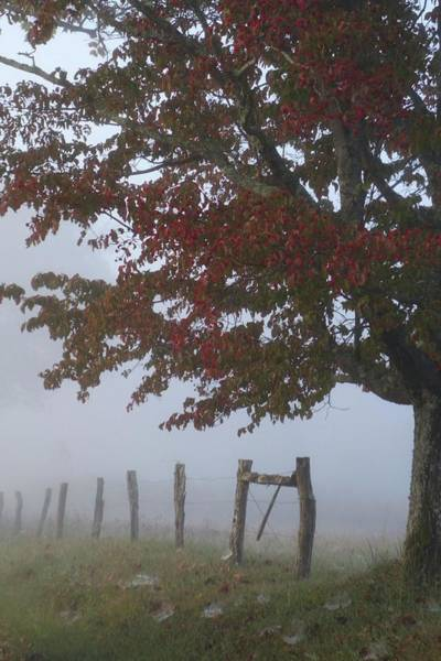 Photograph - Foggy Autumn Morning In Cades Cove by Dan Sproul