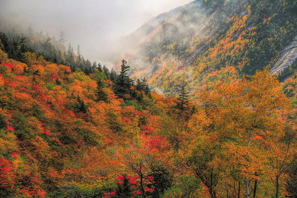 Mixed Media - Foggy Autumn Morning In Crawford Notch State Park by Dan Sproul