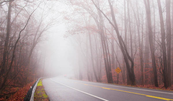Photograph - Foggy Autumn by Rima Biswas