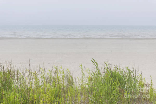 Wall Art - Photograph - Foggy Beach by Elena Elisseeva