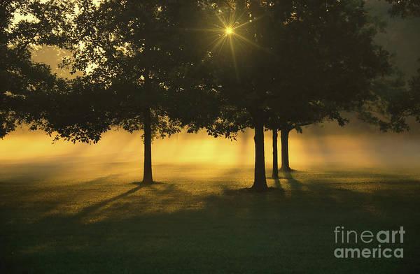 Photograph - Foggy Burst Of Morning by Rachel Cohen