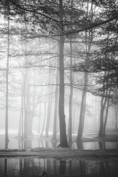 Photograph - Foggy Ellacoya by Robert Clifford