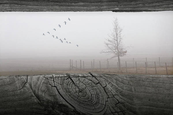 Photograph - Foggy Flight by Randall Nyhof