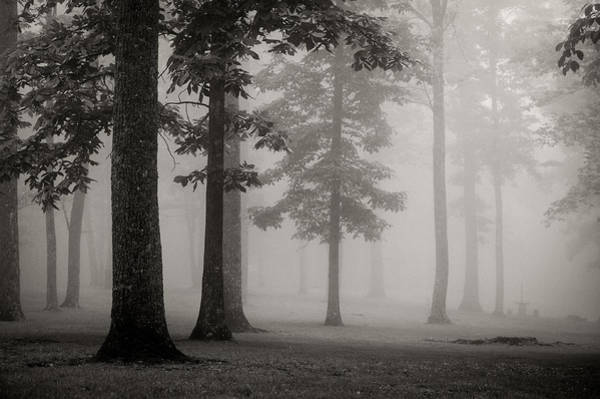 Photograph - Foggy Forest - Bw by Joye Ardyn Durham
