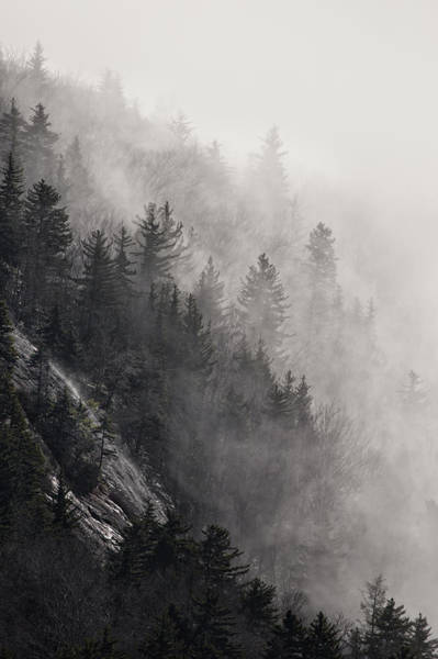 Photograph - Foggy Mountain Forest by Ken Barrett