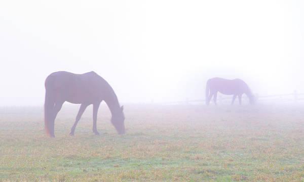 Wall Art - Photograph - Foggy Horse Farm In Whitemarsh Pa by Bill Cannon