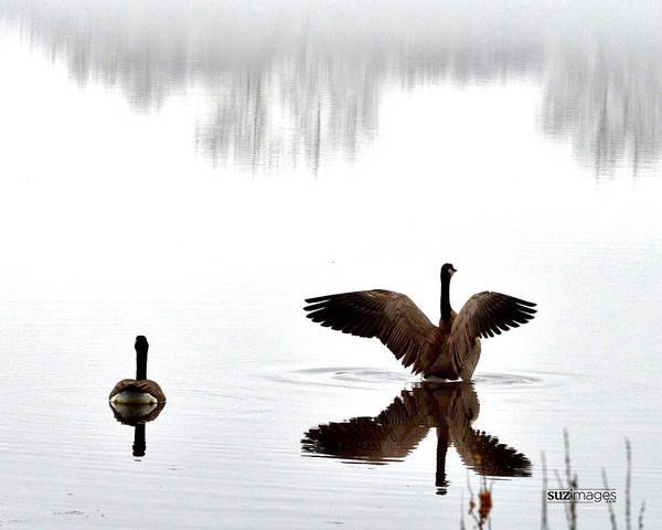 Photograph - Foggy Lake Winona by Susie Loechler