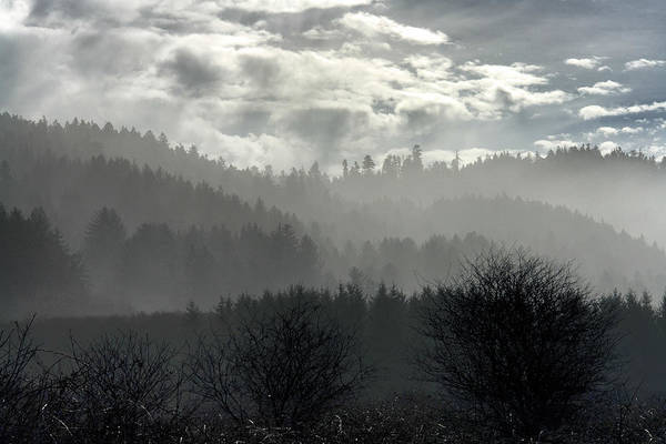 Wall Art - Photograph - Foggy Layers by Betty Depee