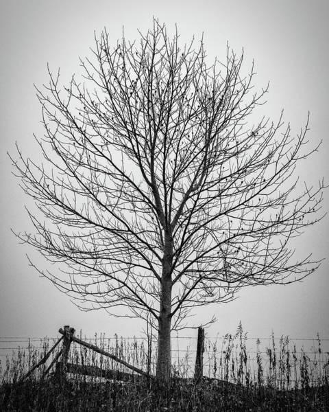 Photograph - Foggy Lone Tree Hill Fine Art by Mike Koenig