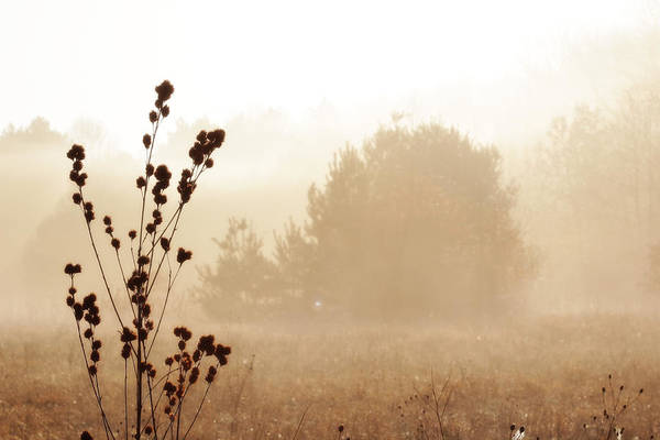 Photograph - Foggy Meadow 2 by Scott Hovind