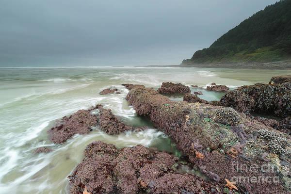 Wall Art - Photograph - Foggy Morning At Neptune Beach, Oregon by Masako Metz
