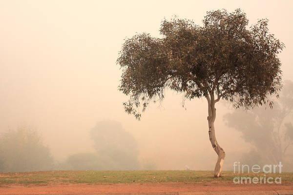 Photograph - Foggy Morning by Elaine Teague