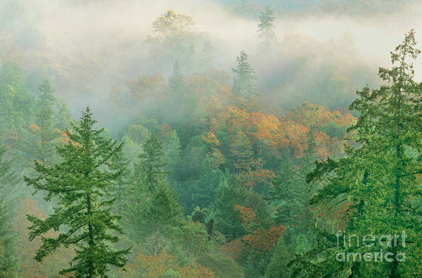 Photograph - Foggy Morning In Humbolt County California by Dave Welling