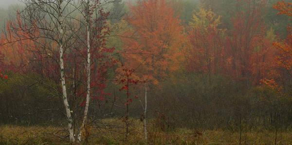 Photograph - Foggy Morning In Sieur De Monts by Darylann Leonard Photography