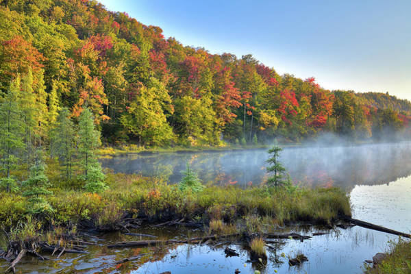 Photograph - Foggy Morning On The Pond by David Patterson