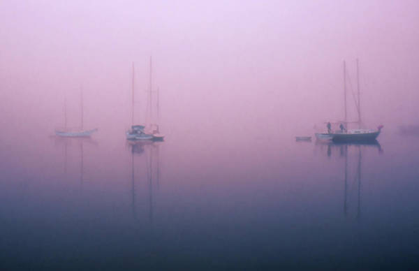 Photograph - Foggy Morning On The  Sassafras River by Richard Goldman