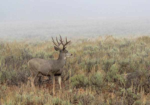 Photograph - Foggy Morning by Ronnie and Frances Howard
