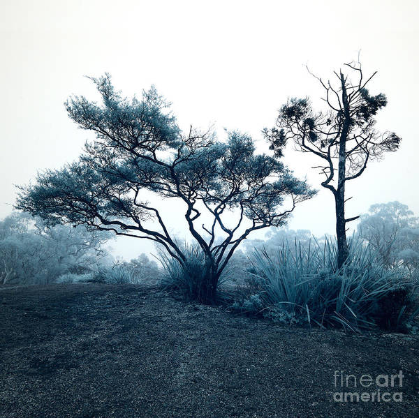 Photograph - Foggy Mountaintop by Russell Brown