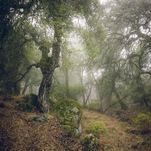 Photograph - Foggy Ravine by Alexander Kunz