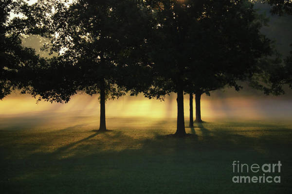 Photograph - Foggy Rays Of Morning by Rachel Cohen
