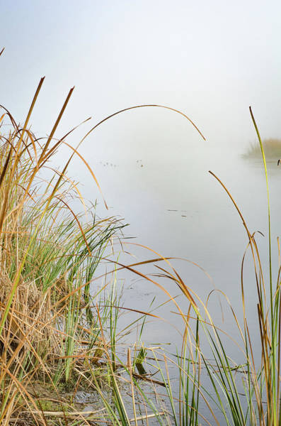 Photograph - Foggy Reeds by Erich Grant