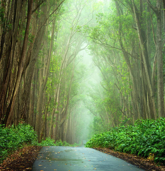 Photograph - Foggy Road by Christopher Johnson