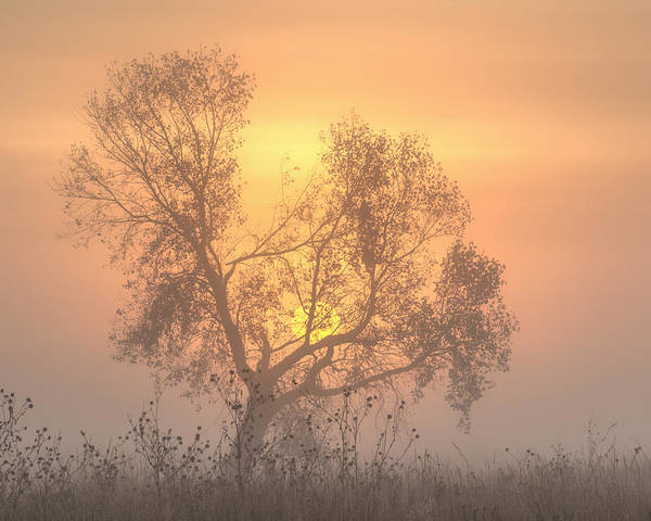 Photograph - Foggy Sunrise -03 by Rob Graham