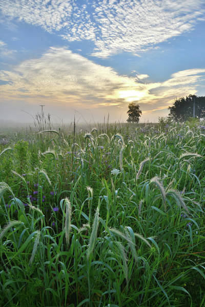 Photograph - Foggy Sunrise At Glacial Park In Mchenry County by Ray Mathis