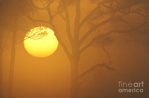 Photograph - Foggy Sunrise by Clarence Holmes
