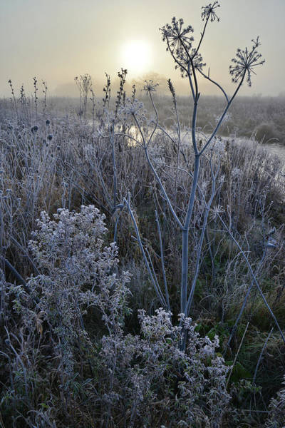 Photograph - Foggy Sunrise In Glacial Park by Ray Mathis