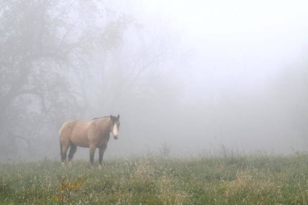 Amana Wall Art - Photograph - Foggy Surprise by Charley Starnes