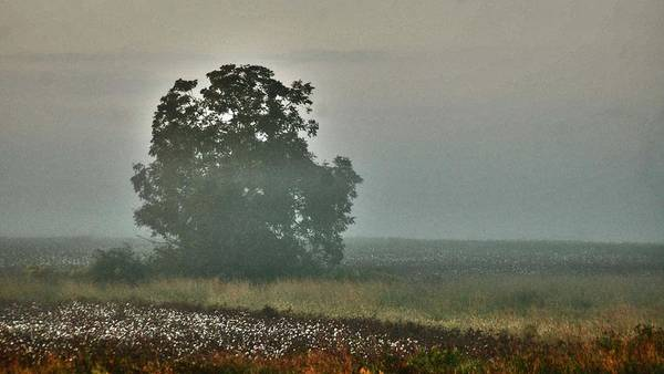 Pea Digital Art - Foggy Tree In The Field by Michael Thomas