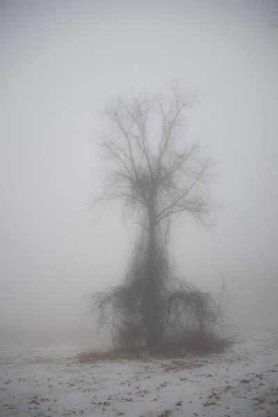 Foggy Walnut Art Print