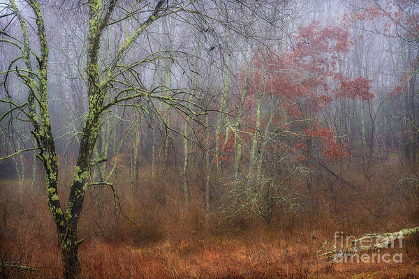 Photograph - Foggy Wildlife Management Area by Thomas R Fletcher