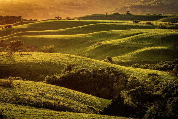 Photograph - Folds Of Green by Scott Bean
