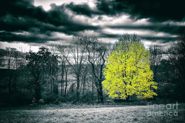 New Preston Ct Photograph - Foliage Focused by Grant Dupill