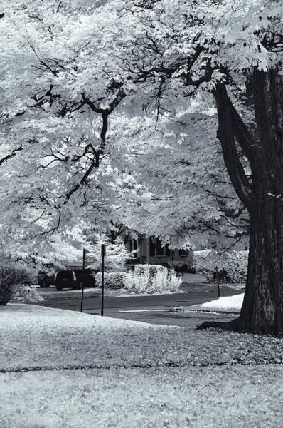 Photograph - Foliage In Black And White by Tom Singleton