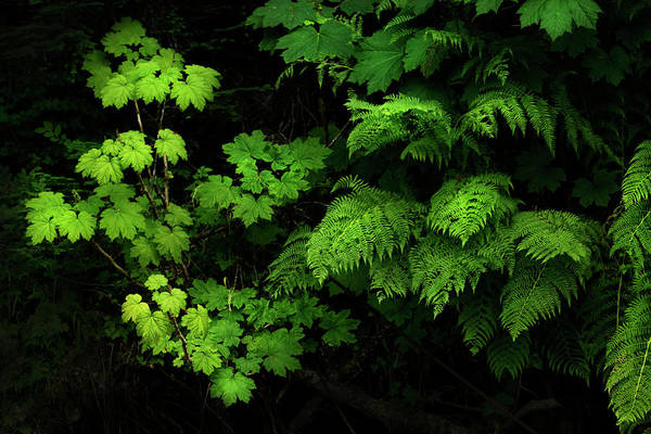 Photograph - Foliage In The Forest by David Lunde